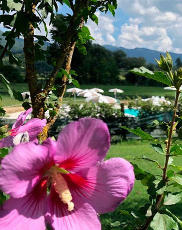 fiore-in-piscina03